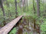 озеро Свитязь в Украине