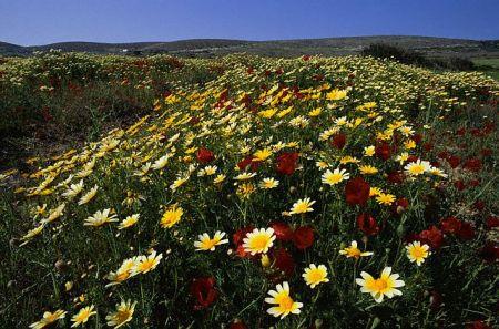 Долина бабочек на острове Родос (Греция)