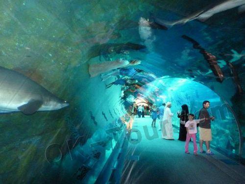 аквариум в Дубай-моле
